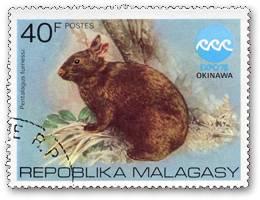 アマミノクロウサギの画像 p1_3
