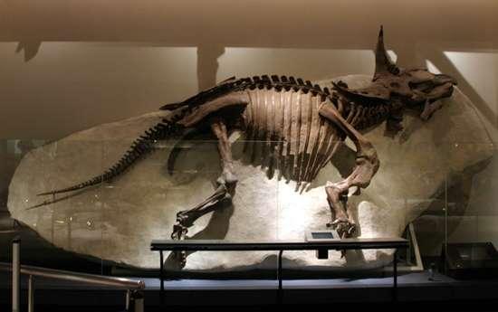 トリケラトプスの画像 p1_23